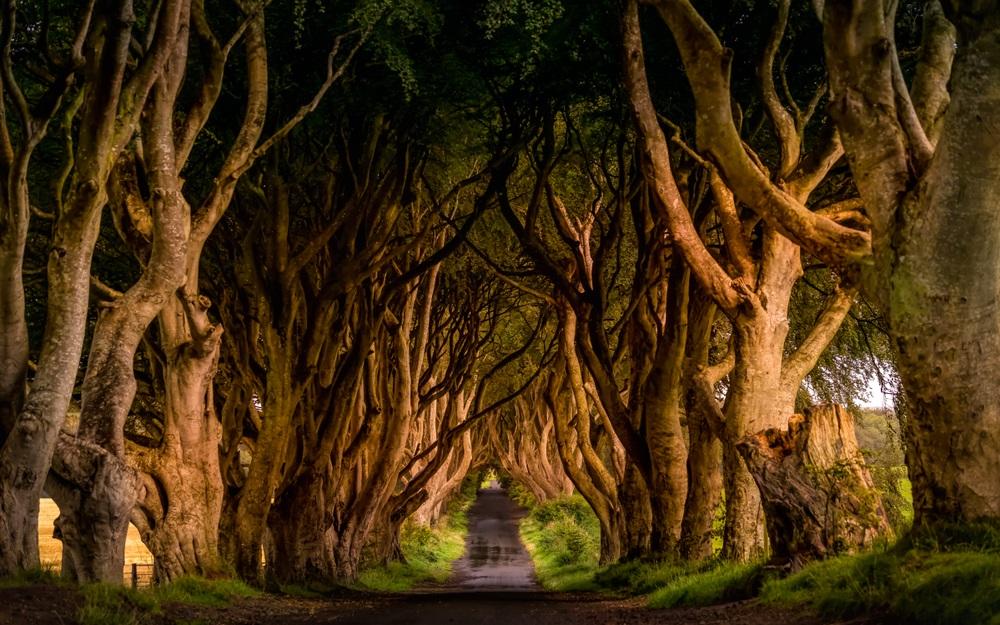 Dark Hedges út Trónok harca Írország kalandtúra