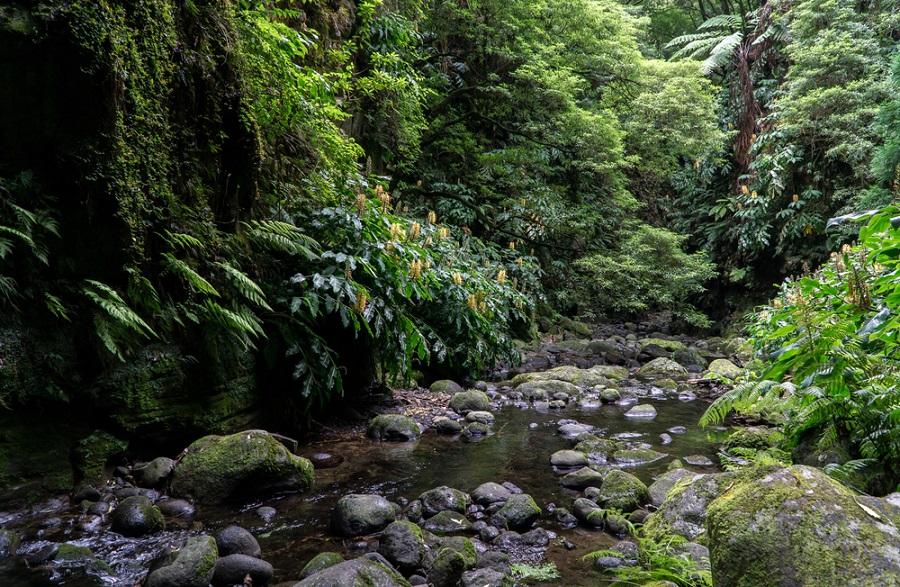 Faial de Terra szurdokvölgy Nordeste Sao Miguel kalandtúra Azori