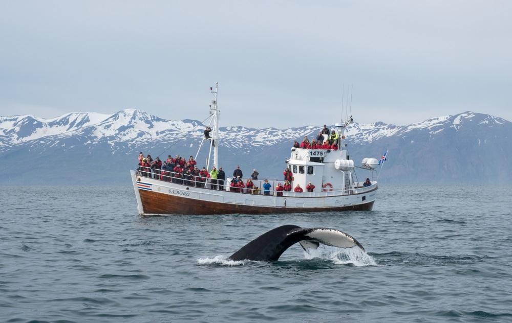 Husavik bálnales Izlandon